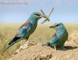 У птицы есть гнездо
