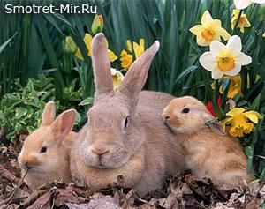 Новорожденные зайчата