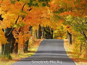 Осень листопад