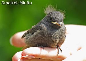 Птенцы покидают гнезда