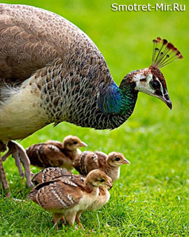 Птицы выхаживают птенцов