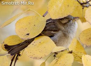 Птицы осенью фото