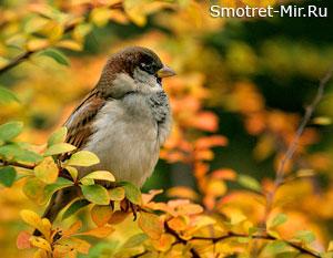 Птицы осенью