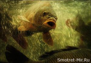 Рыбы осенью