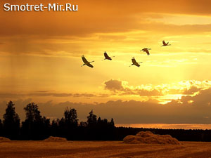 Осенний пролет птиц