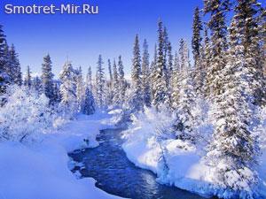 Прогулка зимним лесом
