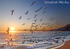 Пролет птиц фото
