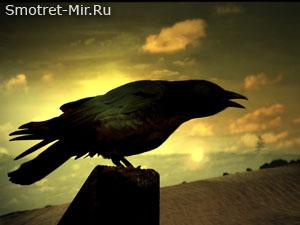 Птица черный ворон
