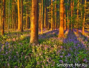 В весеннем лесу фото