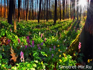 Картинка лес весной