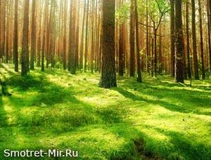 Красивый лес весной