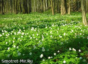 Лес весной фото