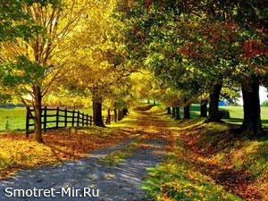 Люблю осень