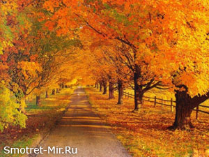Пейзаж осень