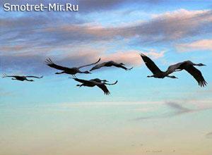 Птицы прилетают весной
