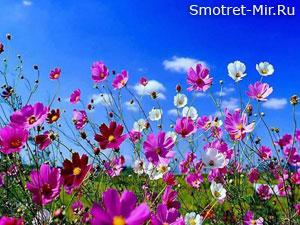 Цветы ранней весной