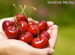 Плоды июня черешня