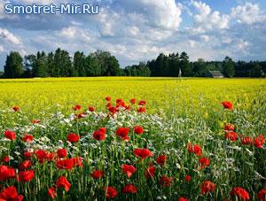 Фото страна Эстония
