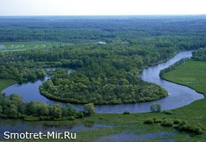 Брянский лес фото