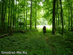 Брянский лес