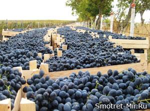 Виноград Молдовы