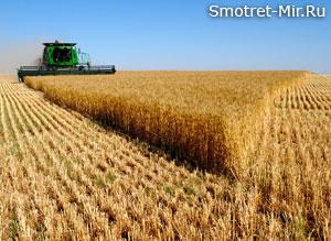 Картинки хлебное поле