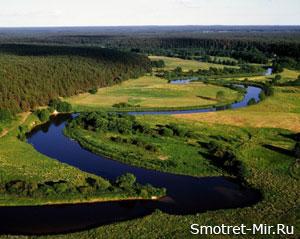 Лес в Литве фото