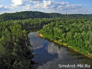 Лес в Литве