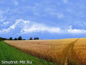 Пейзажи Молдавии
