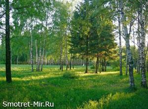 Фото леса в Литве