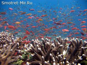 Молуккские острова Индонезия