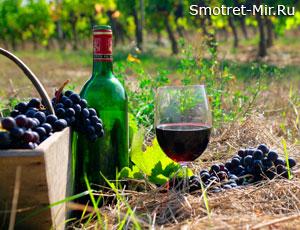 Виноделие в Бордо