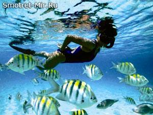 Отдых на Барбадосе фото