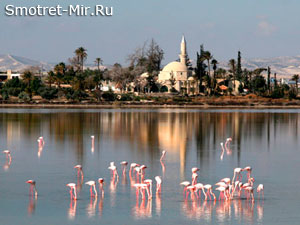 Красочные фламинго Ларнака