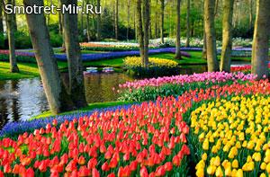 Голландия - парк цветов Кекенхоф