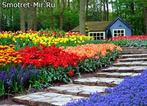Королевский парк цветов Кекенхоф - Нидерланды