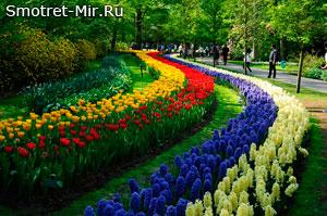 Парк цветов Кёкенхоф в Нидерландах