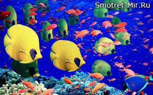 Рыбы Большого Барьерного рифа