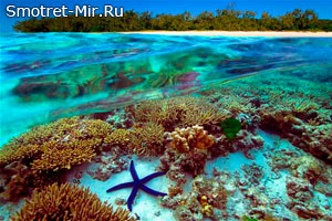 Из чего состоит Большой Барьерный риф
