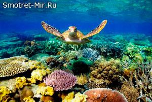 Как образуются коралловые рифы